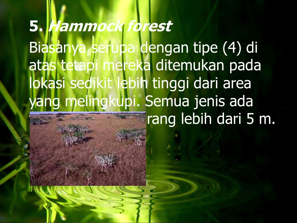 5. Hammock forest Biasanya serupa dengan tipe (4) di atas tetapi mereka ditemukan pada lokasi sedikit lebih tinggi dari area yang melingkupi. Semua je