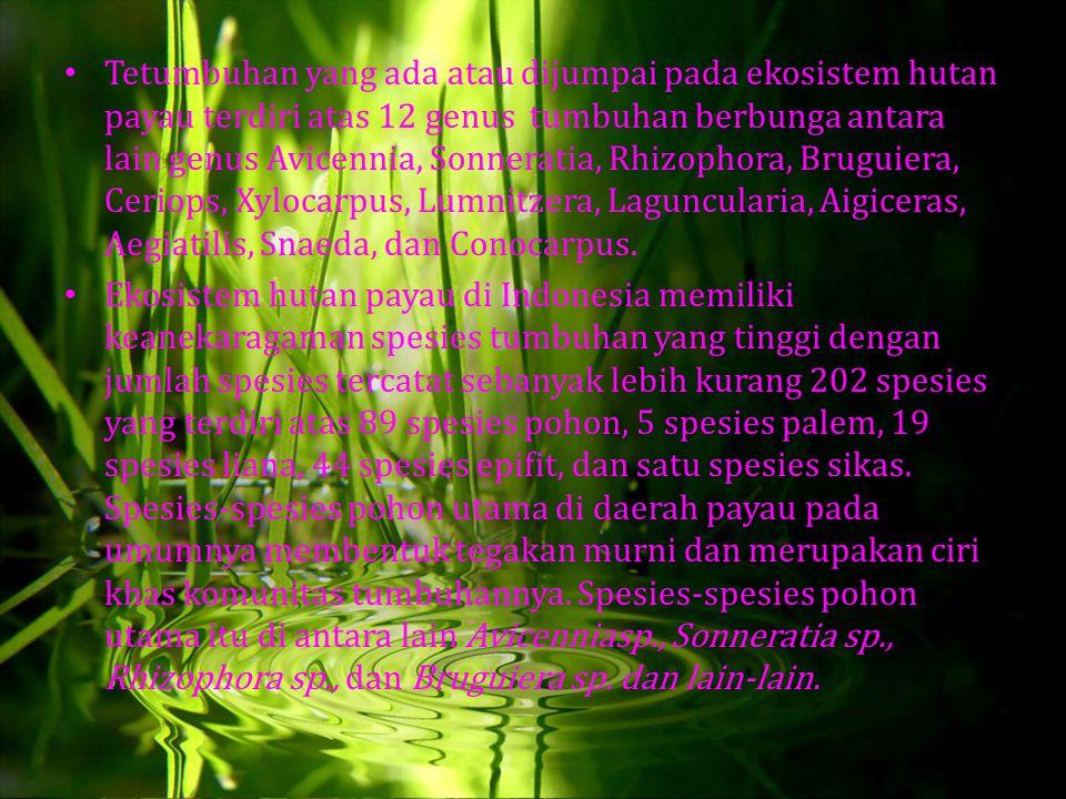 Tetumbuhan yang ada atau dijumpai pada ekosistem hutan payau terdiri atas 12 genus tumbuhan berbunga antara lain genus Avicennia, Sonneratia, Rhizopho