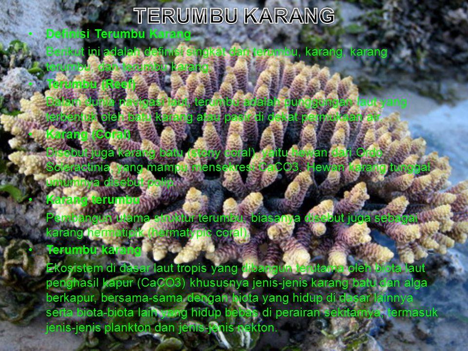 Definisi Terumbu Karang Berikut ini adalah definisi singkat dari terumbu, karang, karang terumbu, dan terumbu karang. Terumbu (Reef) Dalam dunia navig