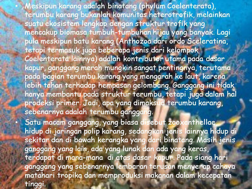 Meskipun karang adalah binatang (phylum Coelenterata), terumbu karang bukanlah komunitas heterotrofik, melainkan suatu ekosistem lengkap dengan strukt