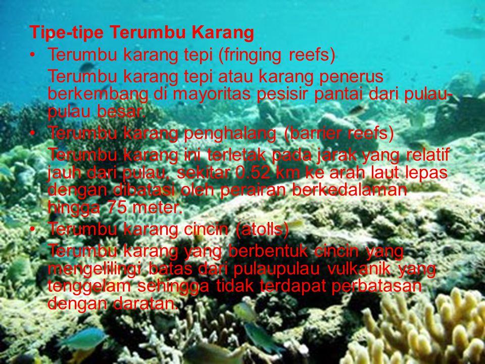 Tipe-tipe Terumbu Karang Terumbu karang tepi (fringing reefs) Terumbu karang tepi atau karang penerus berkembang di mayoritas pesisir pantai dari pula