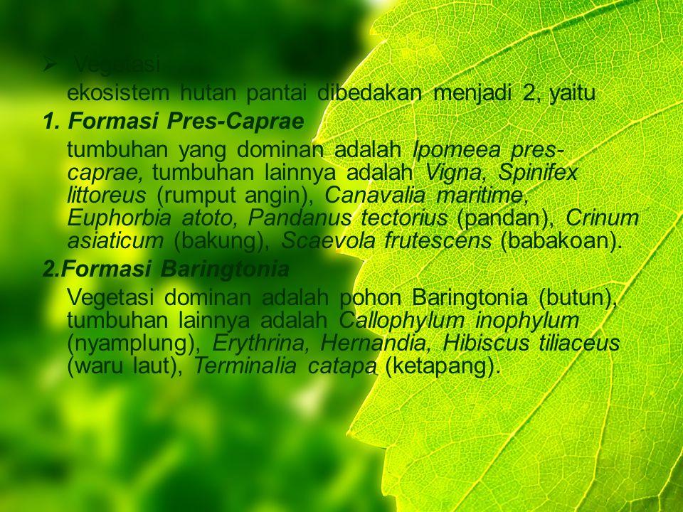  Vegetasi ekosistem hutan pantai dibedakan menjadi 2, yaitu 1. Formasi Pres-Caprae tumbuhan yang dominan adalah Ipomeea pres- caprae, tumbuhan lainny