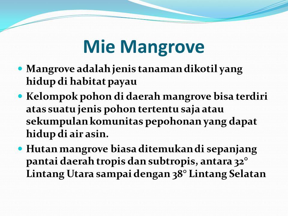 Mie Mangrove Mangrove adalah jenis tanaman dikotil yang hidup di habitat payau Kelompok pohon di daerah mangrove bisa terdiri atas suatu jenis pohon t