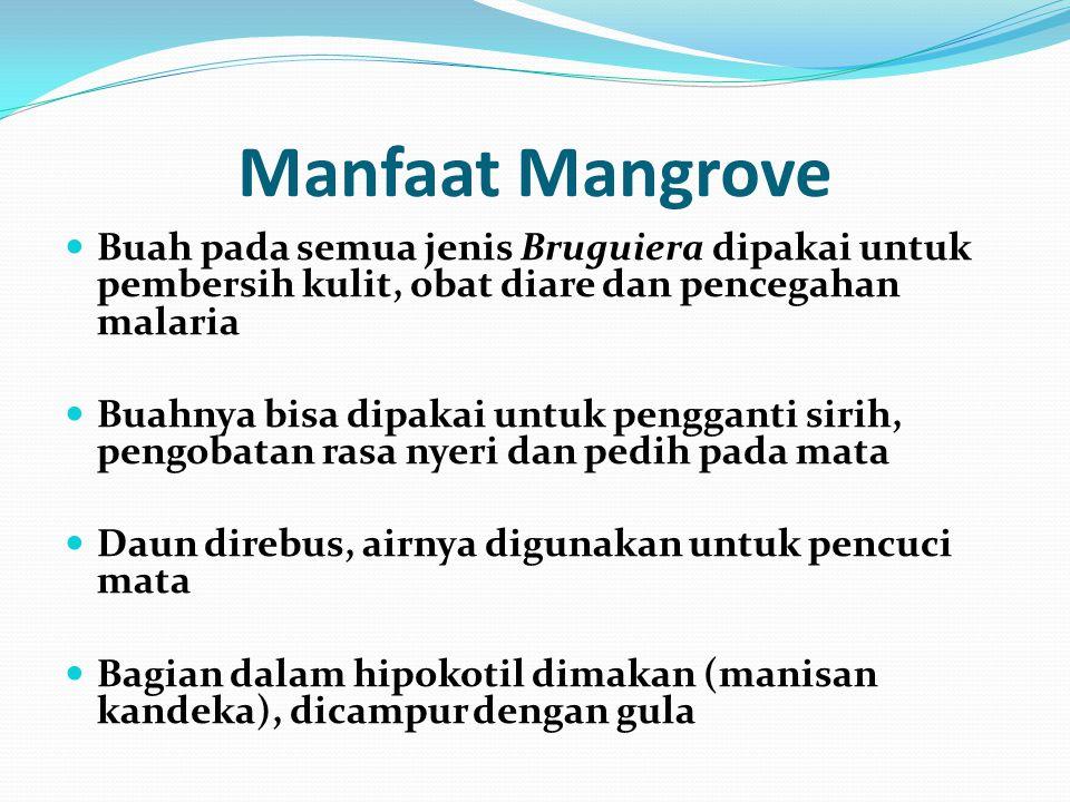 Manfaat Mangrove Buah pada semua jenis Bruguiera dipakai untuk pembersih kulit, obat diare dan pencegahan malaria Buahnya bisa dipakai untuk pengganti