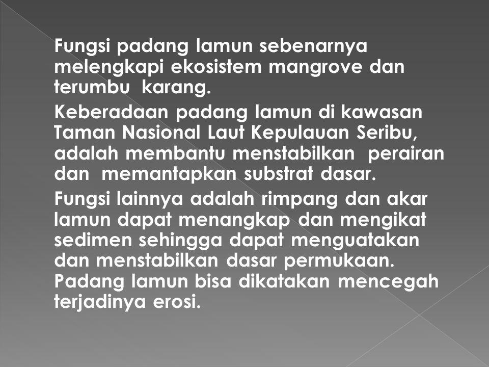  Padang Lamun Lamun adalah sejenis tumbuhan yaitu tumbuhan berbunga yang sudah sepenuhnya menyesuaikan diri hidup tergenang di dalam air laut. Padang