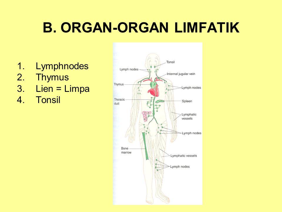 B. ORGAN-ORGAN LIMFATIK 1.Lymphnodes 2.Thymus 3.Lien = Limpa 4.Tonsil