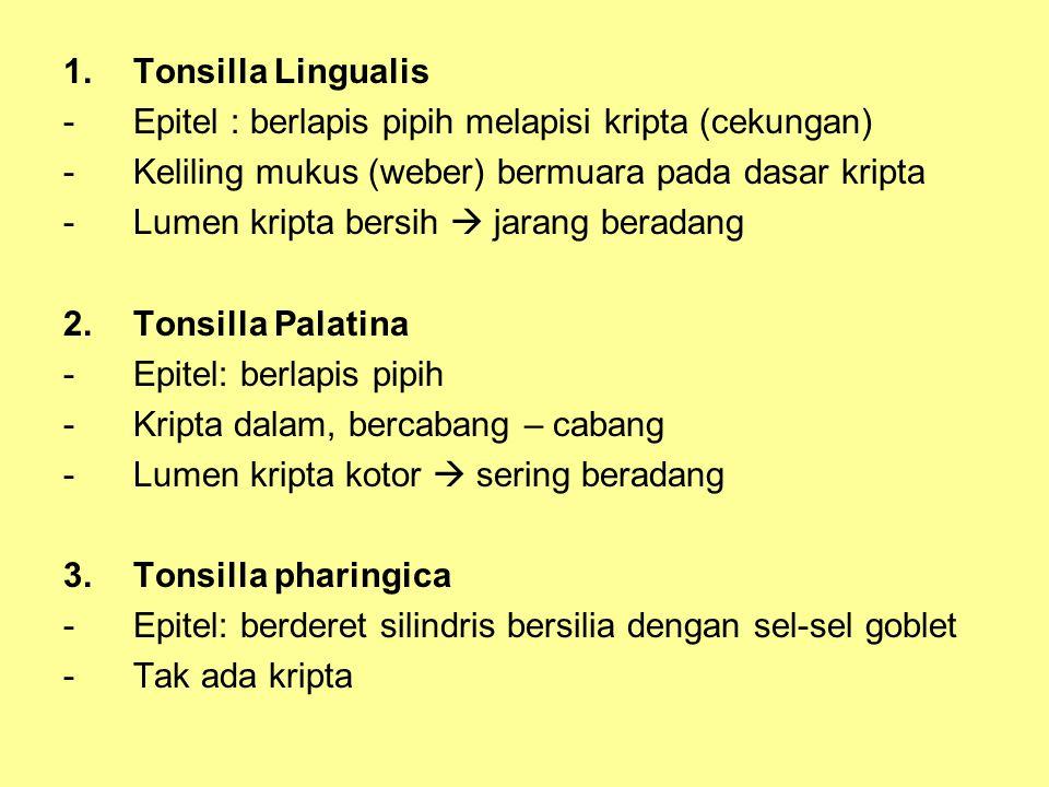 1.Tonsilla Lingualis -Epitel : berlapis pipih melapisi kripta (cekungan) -Keliling mukus (weber) bermuara pada dasar kripta -Lumen kripta bersih  jarang beradang 2.Tonsilla Palatina -Epitel: berlapis pipih -Kripta dalam, bercabang – cabang -Lumen kripta kotor  sering beradang 3.Tonsilla pharingica -Epitel: berderet silindris bersilia dengan sel-sel goblet -Tak ada kripta