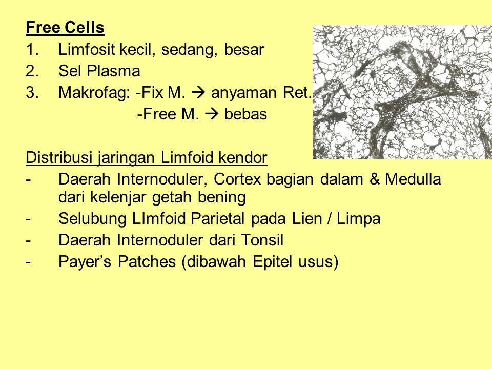 Free Cells 1.Limfosit kecil, sedang, besar 2.Sel Plasma 3.Makrofag: -Fix M.