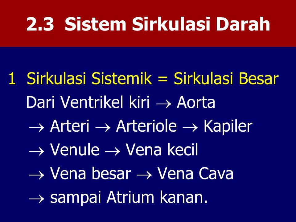 2.3 Sistem Sirkulasi Darah 1 Sirkulasi Sistemik = Sirkulasi Besar Dari Ventrikel kiri  Aorta  Arteri  Arteriole  Kapiler  Venule  Vena kecil  Vena besar  Vena Cava  sampai Atrium kanan.