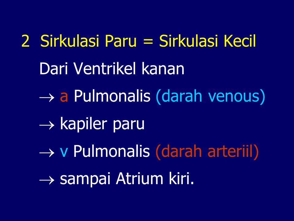 2 Sirkulasi Paru = Sirkulasi Kecil Dari Ventrikel kanan  a Pulmonalis (darah venous)  kapiler paru  v Pulmonalis (darah arteriil)  sampai Atrium kiri.