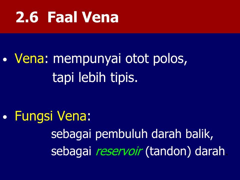 2.6 Faal Vena Vena: mempunyai otot polos, tapi lebih tipis.