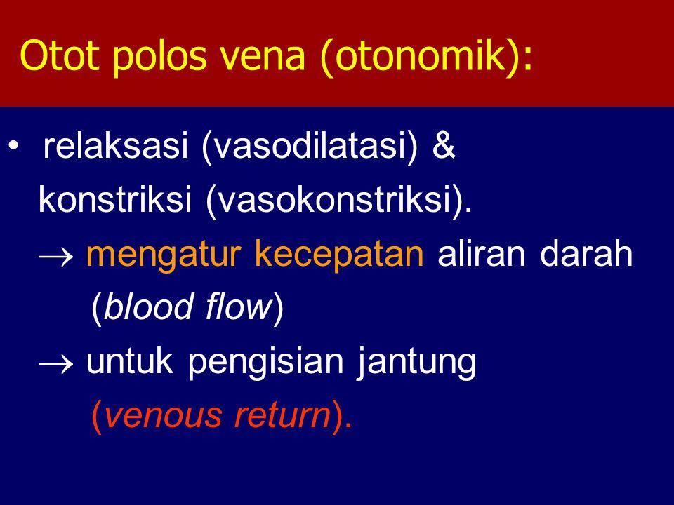 Otot polos vena (otonomik): relaksasi (vasodilatasi) & konstriksi (vasokonstriksi).