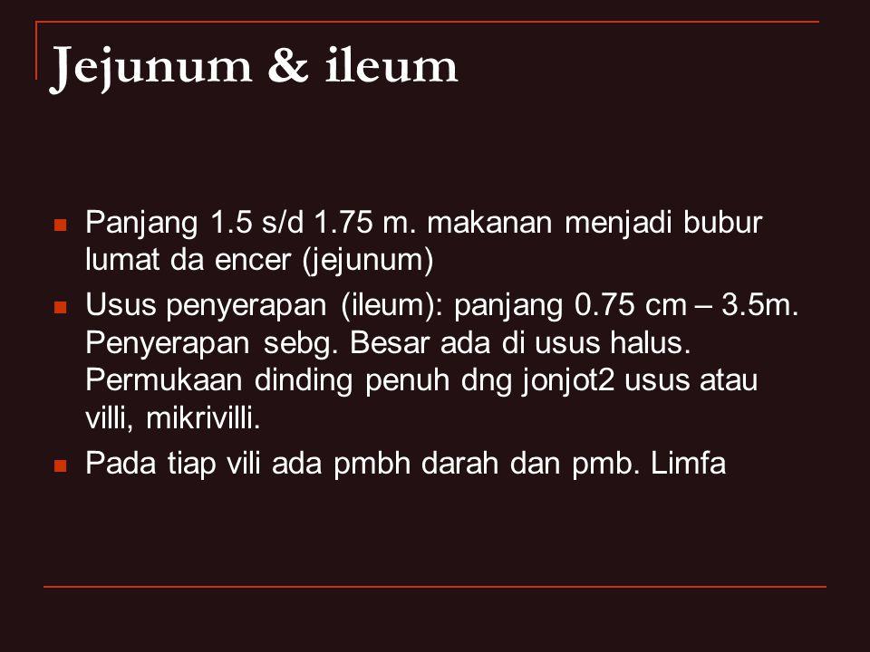 Jejunum & ileum Panjang 1.5 s/d 1.75 m. makanan menjadi bubur lumat da encer (jejunum) Usus penyerapan (ileum): panjang 0.75 cm – 3.5m. Penyerapan seb