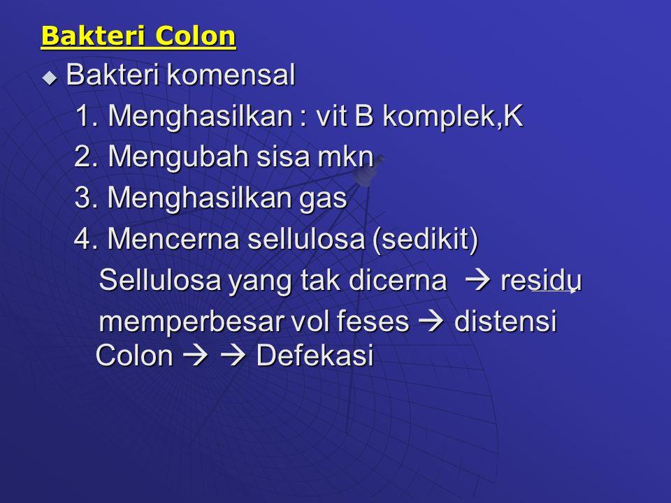 Bakteri Colon  Bakteri komensal 1. Menghasilkan : vit B komplek,K 2. Mengubah sisa mkn 3. Menghasilkan gas 4. Mencerna sellulosa (sedikit) Sellulosa