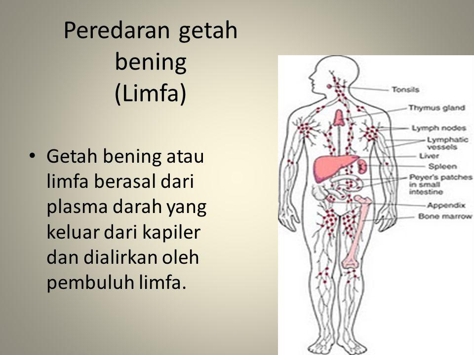 Peredaran getah bening (Limfa) Getah bening atau limfa berasal dari plasma darah yang keluar dari kapiler dan dialirkan oleh pembuluh limfa.