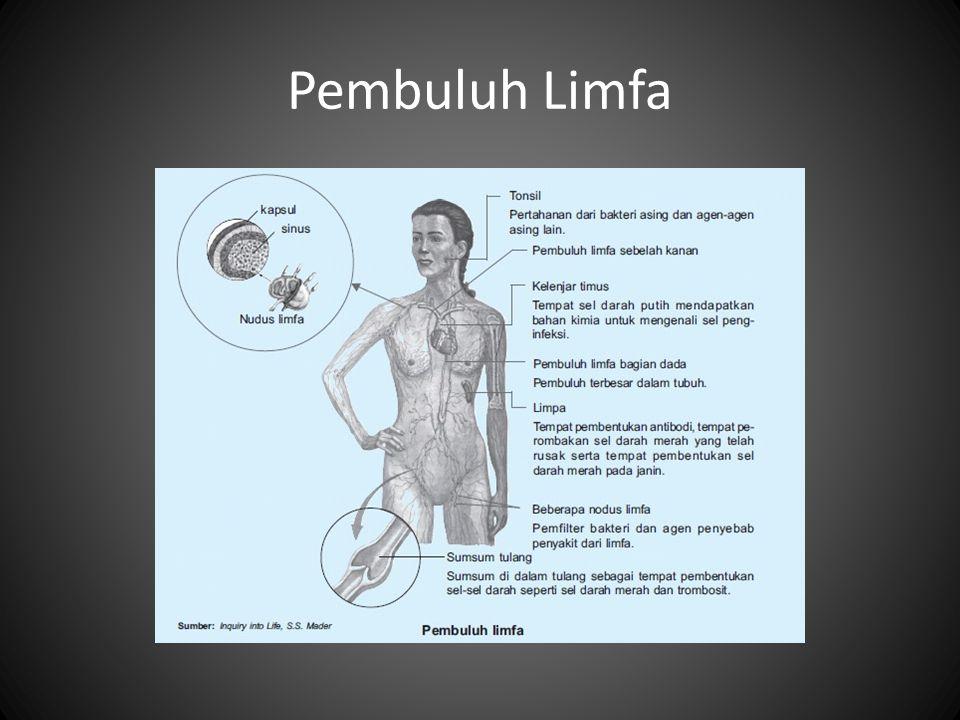 Perbedaan sistem limfa dan peredaran darah