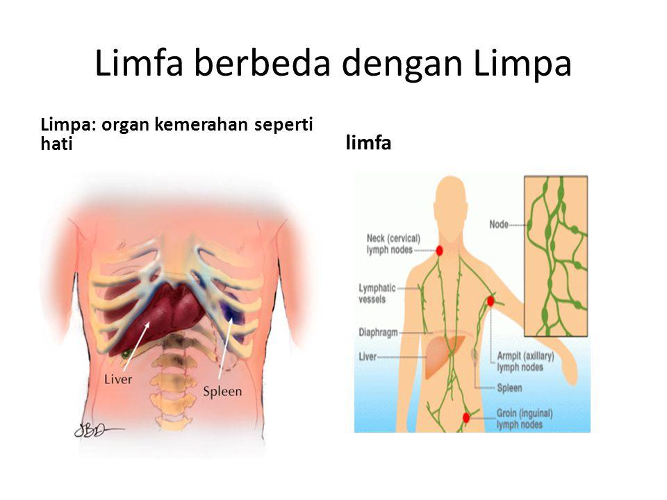 Limfa berbeda dengan Limpa Limpa: organ kemerahan seperti hati limfa
