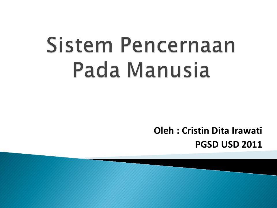 Oleh : Cristin Dita Irawati PGSD USD 2011