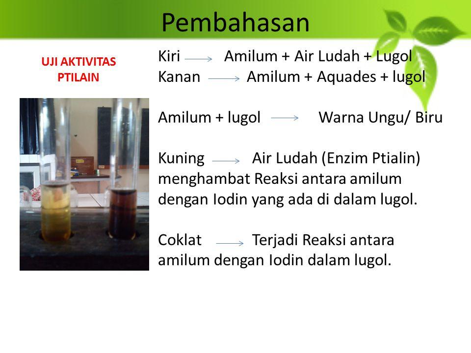 Pembahasan Kiri Amilum + Air Ludah + Lugol Kanan Amilum + Aquades + lugol Amilum + lugol Warna Ungu/ Biru KuningAir Ludah (Enzim Ptialin) menghambat R