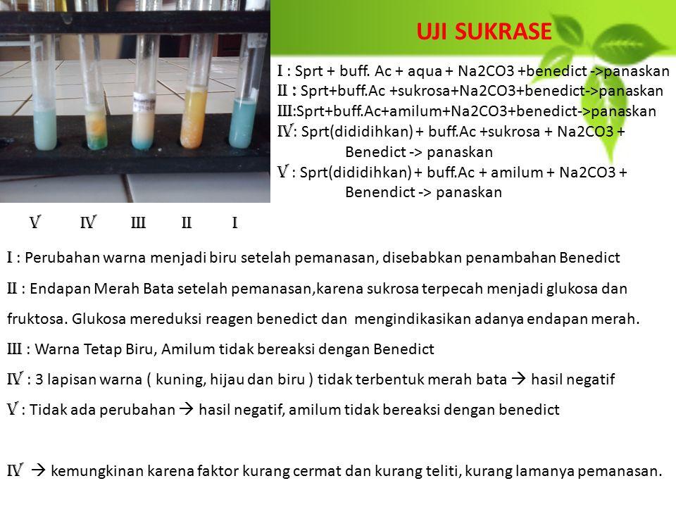 UJI SUKRASE IIIIIIIVV I : Sprt + buff. Ac + aqua + Na2CO3 +benedict ->panaskan II : Sprt+buff.Ac +sukrosa+Na2CO3+benedict->panaskan III :Sprt+buff.Ac+