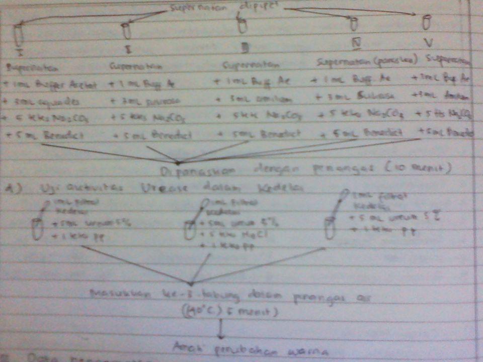 Data Pengamatan A.Uji Ptialin