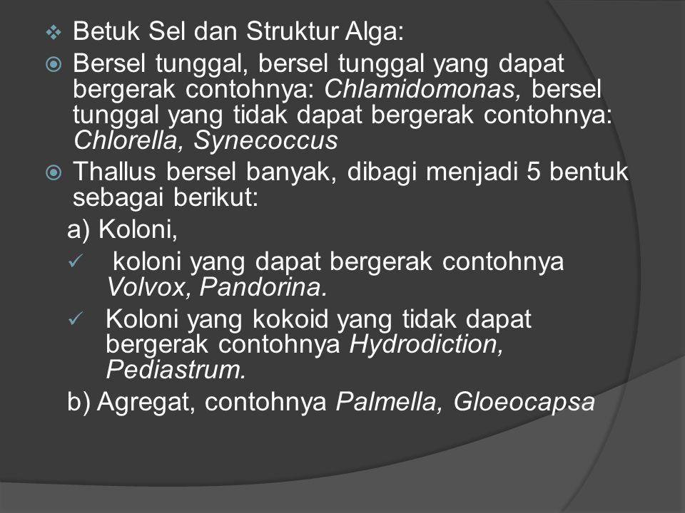  Betuk Sel dan Struktur Alga:  Bersel tunggal, bersel tunggal yang dapat bergerak contohnya: Chlamidomonas, bersel tunggal yang tidak dapat bergerak contohnya: Chlorella, Synecoccus  Thallus bersel banyak, dibagi menjadi 5 bentuk sebagai berikut: a) Koloni, koloni yang dapat bergerak contohnya Volvox, Pandorina.
