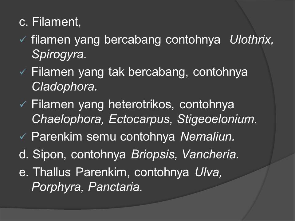 c. Filament, filamen yang bercabang contohnya Ulothrix, Spirogyra. Filamen yang tak bercabang, contohnya Cladophora. Filamen yang heterotrikos, contoh
