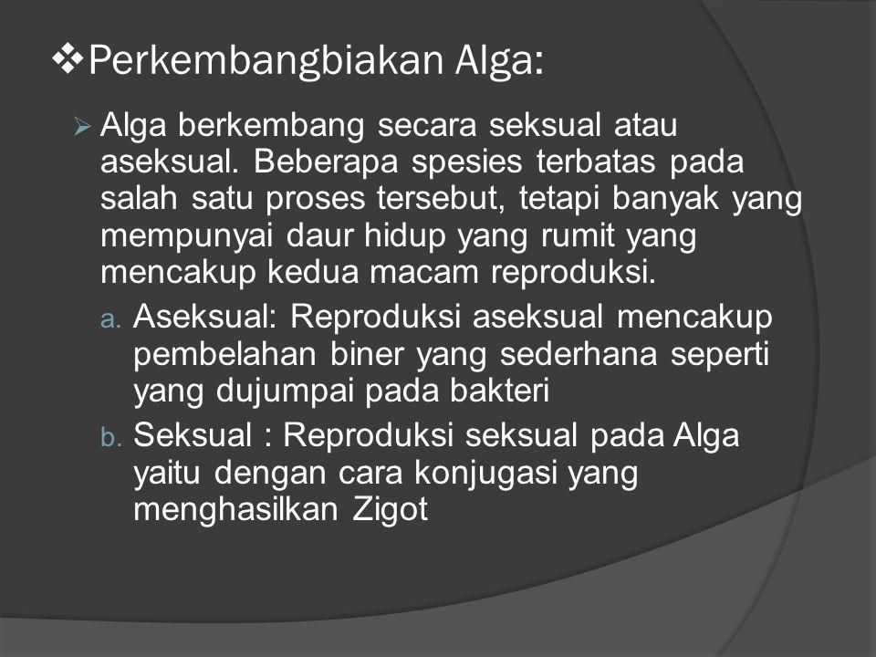  Perkembangbiakan Alga:  Alga berkembang secara seksual atau aseksual.