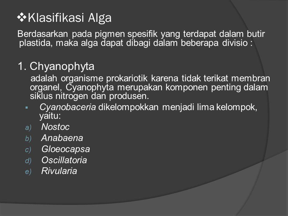  Klasifikasi Alga Berdasarkan pada pigmen spesifik yang terdapat dalam butir plastida, maka alga dapat dibagi dalam beberapa divisio : 1. Chyanophyta