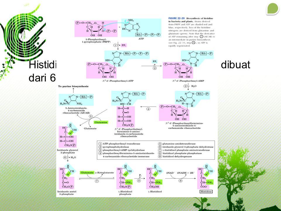 Histidine merupakan asam amino yang dibuat dari 6-glukosa