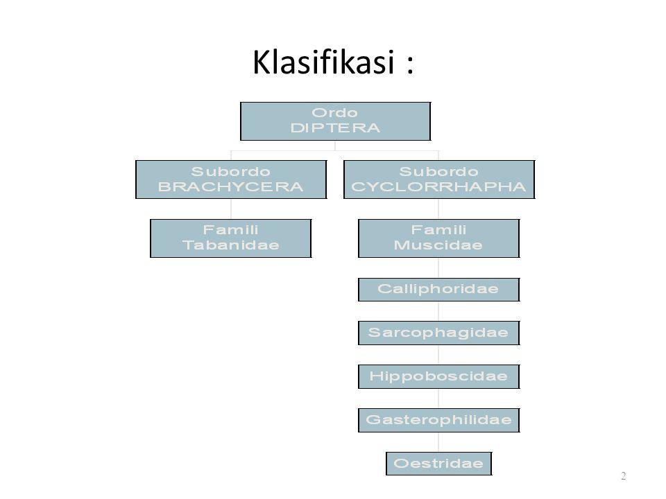 Klasifikasi : 2
