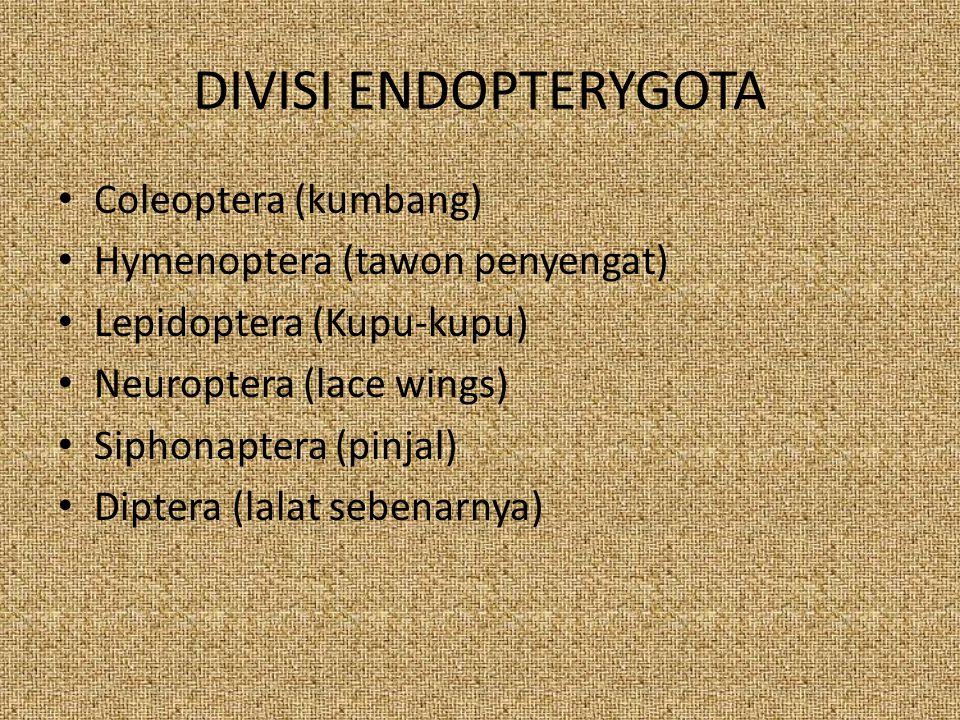 DIVISI ENDOPTERYGOTA Coleoptera (kumbang) Hymenoptera (tawon penyengat) Lepidoptera (Kupu-kupu) Neuroptera (lace wings) Siphonaptera (pinjal) Diptera