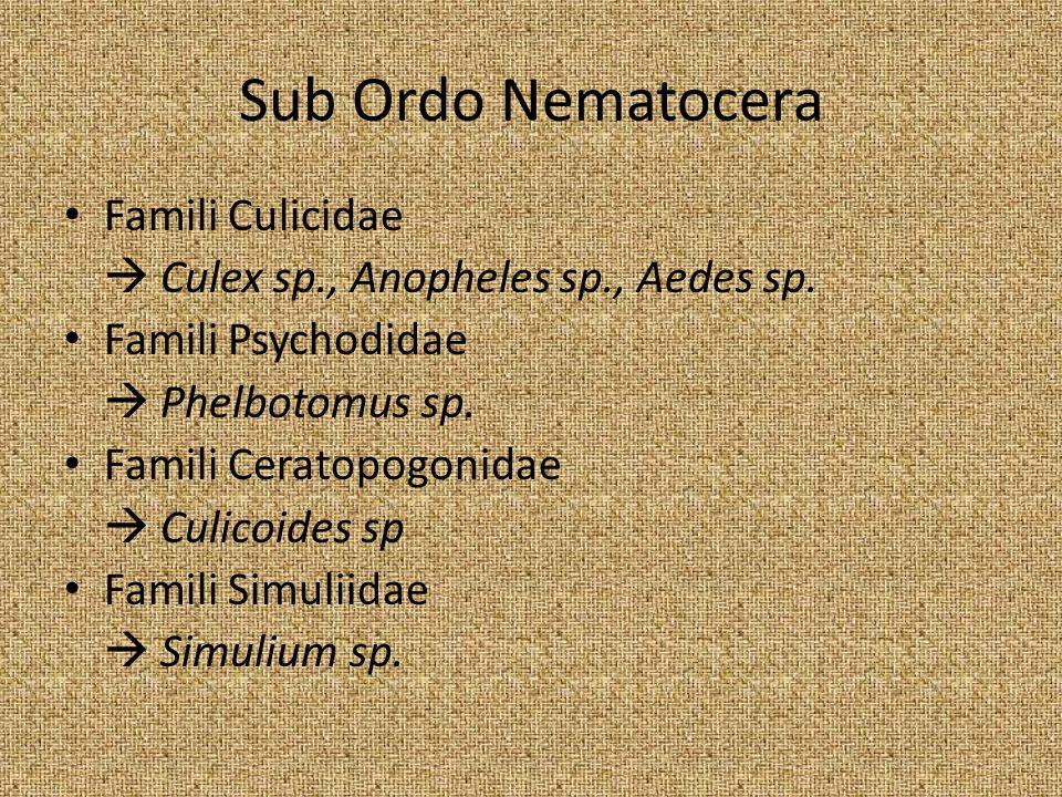 Sub Ordo Nematocera Famili Culicidae  Culex sp., Anopheles sp., Aedes sp. Famili Psychodidae  Phelbotomus sp. Famili Ceratopogonidae  Culicoides sp