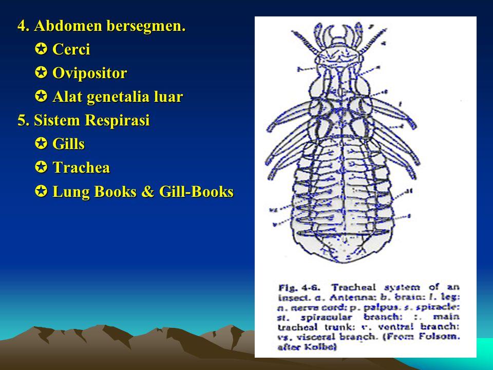 4. Abdomen bersegmen.  Cerci  Cerci  Ovipositor  Ovipositor  Alat genetalia luar  Alat genetalia luar 5. Sistem Respirasi  Gills  Gills  Trac