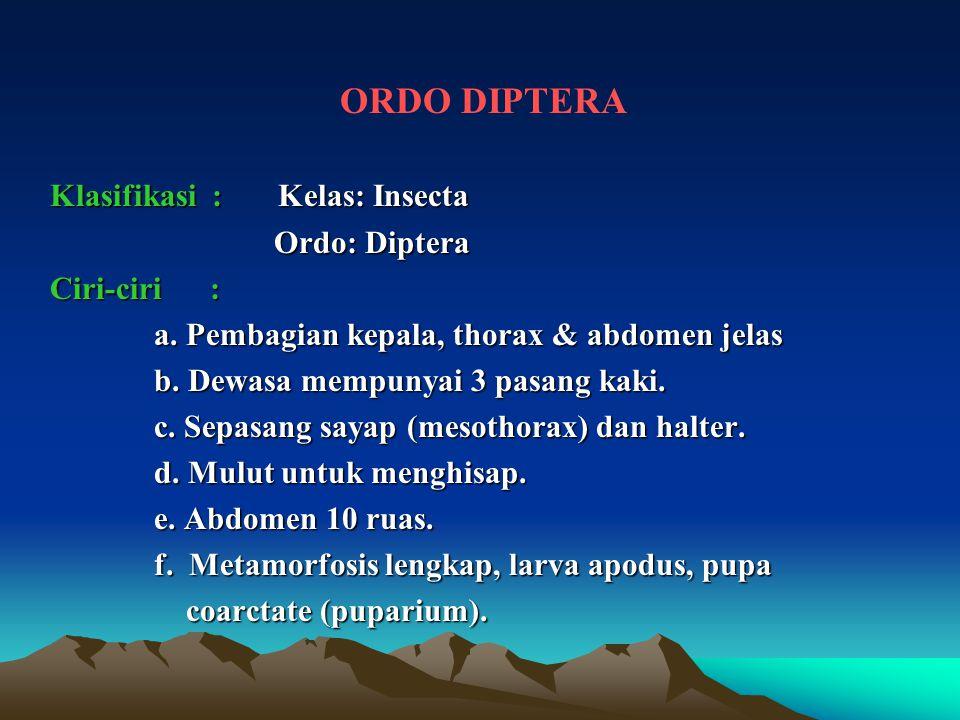 ORDO DIPTERA Klasifikasi : Kelas: Insecta Ordo: Diptera Ordo: Diptera Ciri-ciri : a. Pembagian kepala, thorax & abdomen jelas a. Pembagian kepala, tho