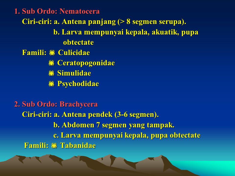 1. Sub Ordo: Nematocera Ciri-ciri: a. Antena panjang (> 8 segmen serupa). Ciri-ciri: a. Antena panjang (> 8 segmen serupa). b. Larva mempunyai kepala,