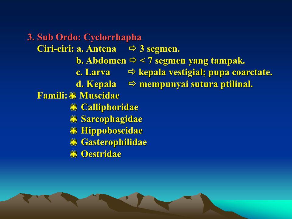 3. Sub Ordo: Cyclorrhapha Ciri-ciri: a. Antena  3 segmen. Ciri-ciri: a. Antena  3 segmen. b. Abdomen  < 7 segmen yang tampak. b. Abdomen  < 7 segm