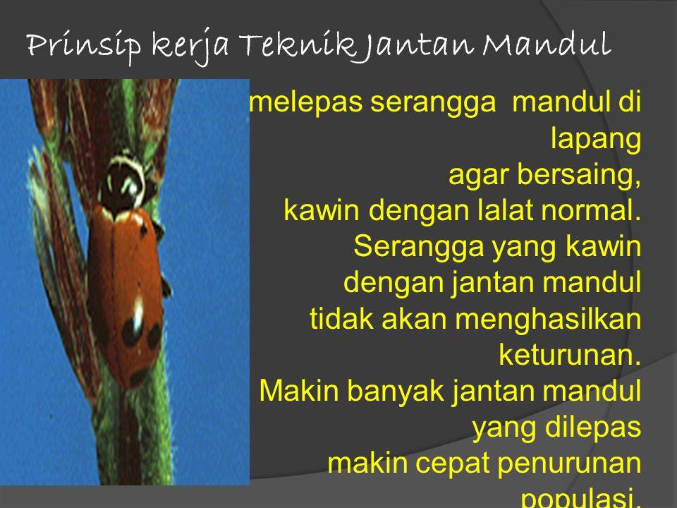 Prinsip kerja Teknik Jantan Mandul melepas serangga mandul di lapang agar bersaing, kawin dengan lalat normal.