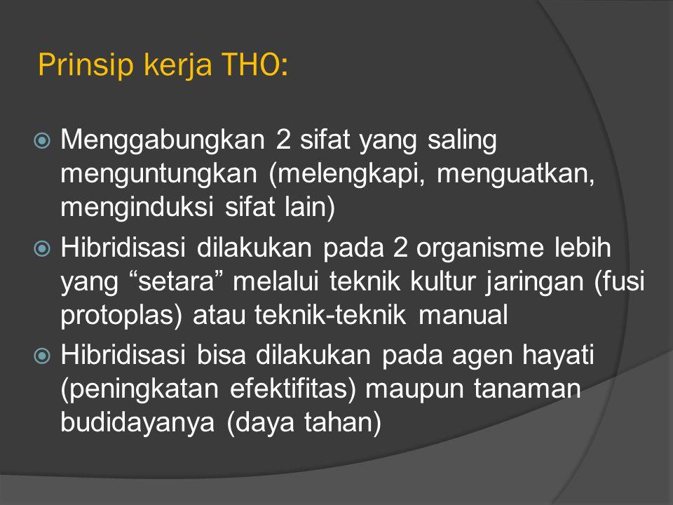 Prinsip kerja THO:  Menggabungkan 2 sifat yang saling menguntungkan (melengkapi, menguatkan, menginduksi sifat lain)  Hibridisasi dilakukan pada 2 organisme lebih yang setara melalui teknik kultur jaringan (fusi protoplas) atau teknik-teknik manual  Hibridisasi bisa dilakukan pada agen hayati (peningkatan efektifitas) maupun tanaman budidayanya (daya tahan)