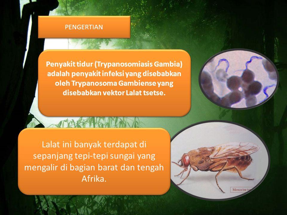 PENGERTIAN Penyakit tidur (Trypanosomiasis Gambia) adalah penyakit infeksi yang disebabkan oleh Trypanosoma Gambiense yang disebabkan vektor Lalat tsetse.