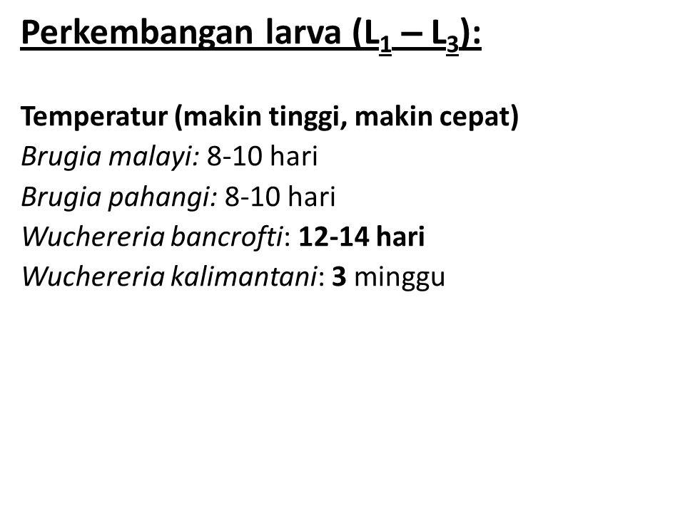 Perkembangan larva (L 1 – L 3 ): Temperatur (makin tinggi, makin cepat) Brugia malayi: 8-10 hari Brugia pahangi: 8-10 hari Wuchereria bancrofti: 12-14