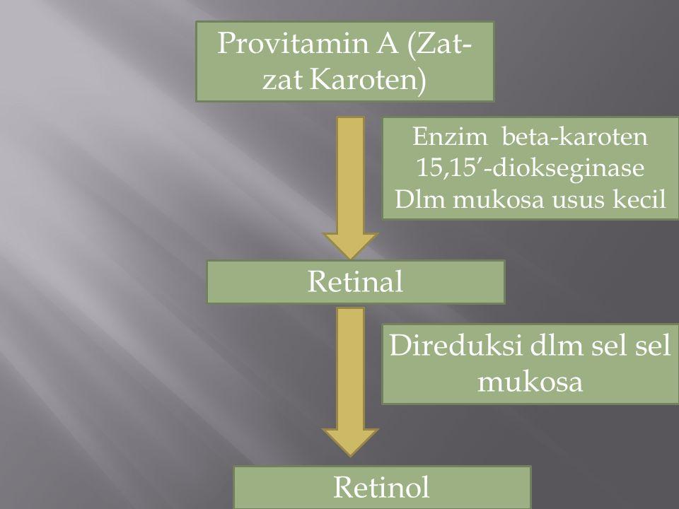 Provitamin A (Zat- zat Karoten) Retinal Retinol Enzim beta-karoten 15,15'-diokseginase Dlm mukosa usus kecil Direduksi dlm sel sel mukosa