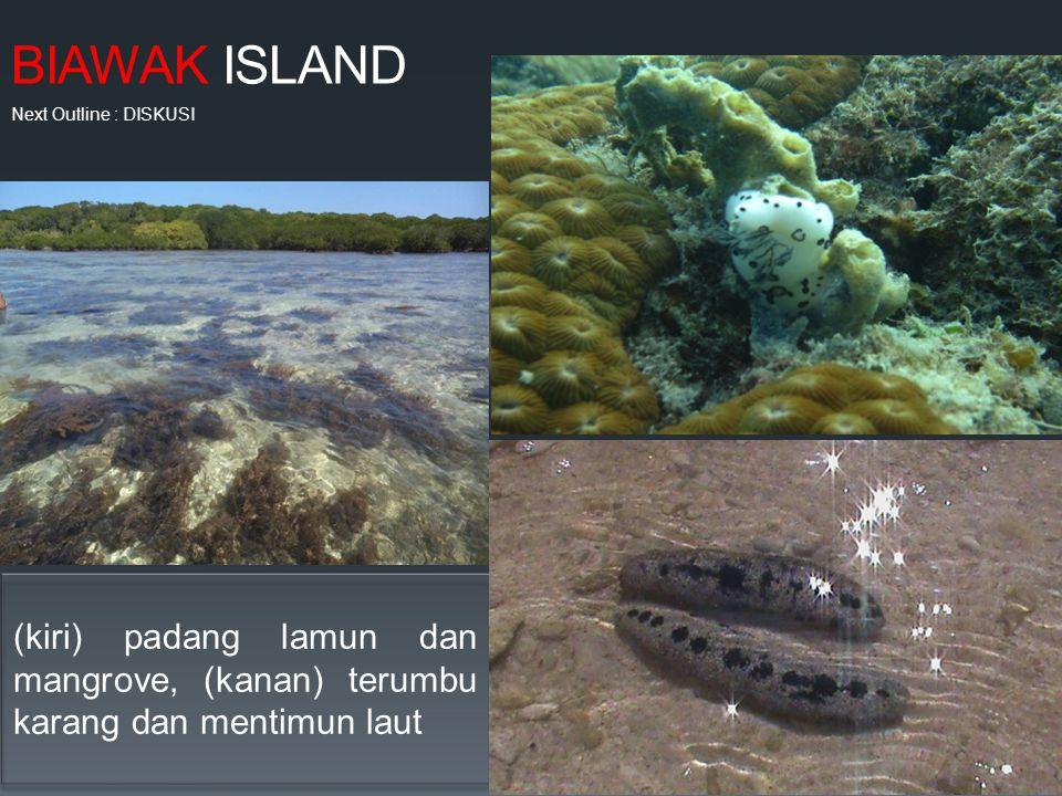 BIAWAK ISLAND (kiri) padang lamun dan mangrove, (kanan) terumbu karang dan mentimun laut Next Outline : DISKUSI