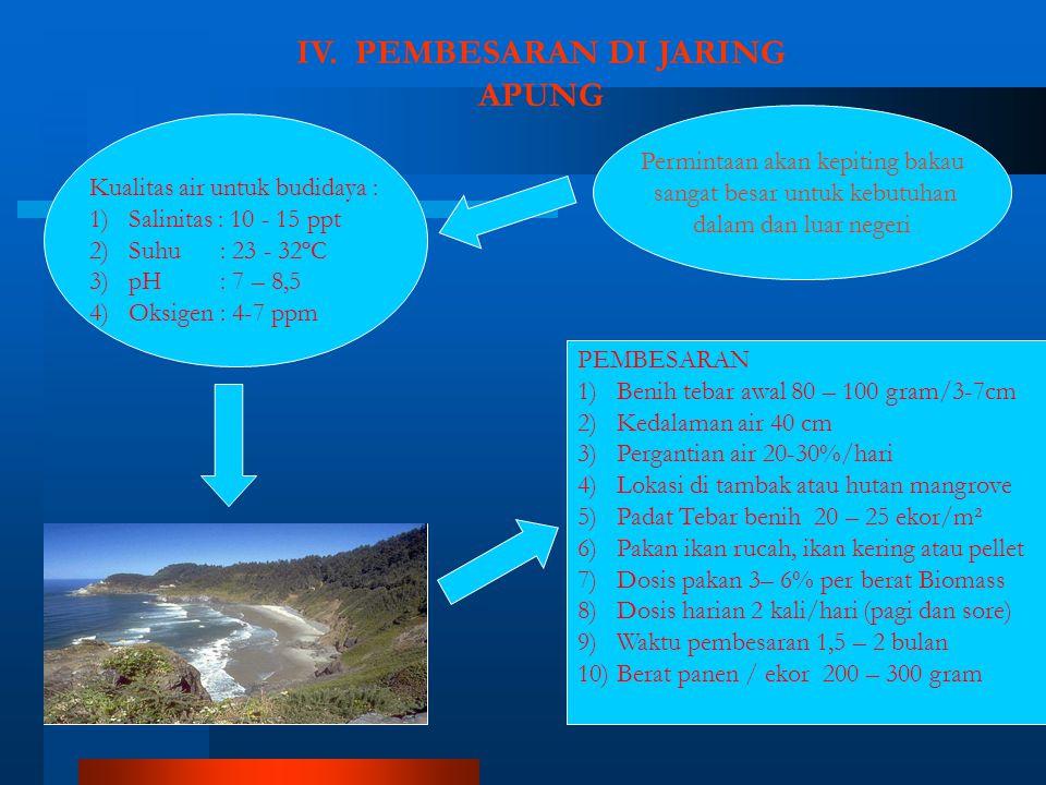 IV. PEMBESARAN DI JARING APUNG Permintaan akan kepiting bakau sangat besar untuk kebutuhan dalam dan luar negeri PEMBESARAN 1)Benih tebar awal 80 – 10