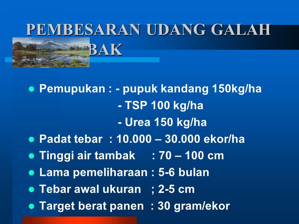 PEMBESARAN UDANG GALAH DI TAMBAK Pemupukan : - pupuk kandang 150kg/ha - TSP 100 kg/ha - Urea 150 kg/ha Padat tebar : 10.000 – 30.000 ekor/ha Tinggi ai
