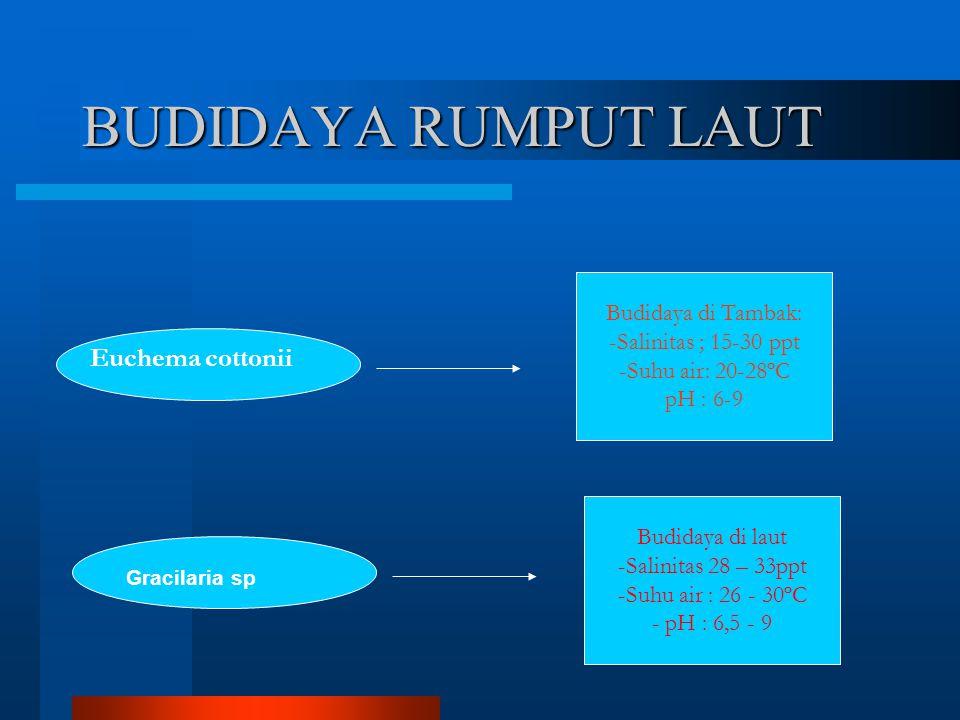 BUDIDAYA RUMPUT LAUT Gracilaria sp Euchema cottonii Budidaya di Tambak: -Salinitas ; 15-30 ppt -Suhu air: 20-28ºC pH : 6-9 Budidaya di laut -Salinitas