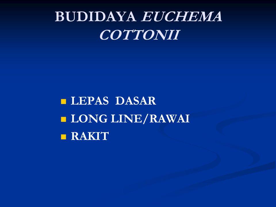 BUDIDAYA EUCHEMA COTTONII LEPAS DASAR LONG LINE/RAWAI RAKIT
