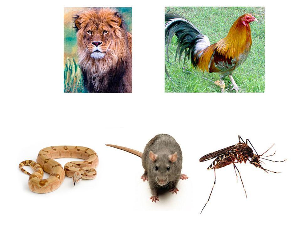 DATA/BIOLOGI/FILM/METAMORFOSIS BIOLOGI TAHAPAN PERTUMBUHAN DAN PERKEMBANGAN PADA KATAK