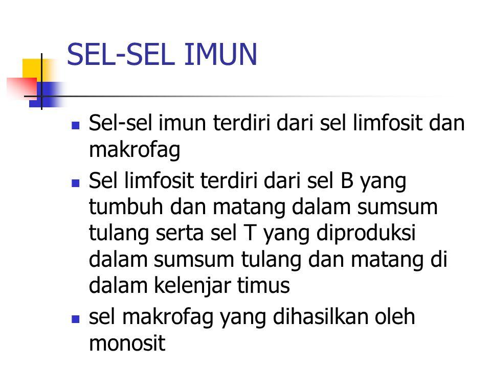 SEL-SEL IMUN Sel-sel imun terdiri dari sel limfosit dan makrofag Sel limfosit terdiri dari sel B yang tumbuh dan matang dalam sumsum tulang serta sel T yang diproduksi dalam sumsum tulang dan matang di dalam kelenjar timus sel makrofag yang dihasilkan oleh monosit