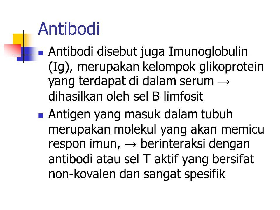 Antibodi Antibodi disebut juga Imunoglobulin (Ig), merupakan kelompok glikoprotein yang terdapat di dalam serum → dihasilkan oleh sel B limfosit Antig